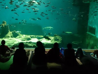 Aquarium of Seville